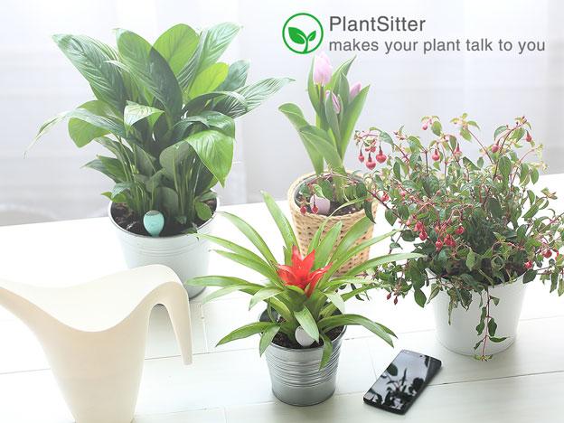 plantsitter