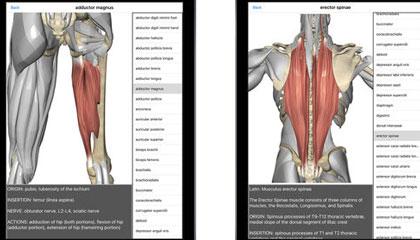 Visual-Anatomy