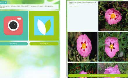 4 Plant Identification Apps For Iphone