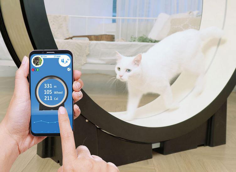 The Little Cat: App Smart Cat Exercise Wheel -