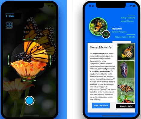 Insect Identification: This AI App Can Identify Insects from Photos -
